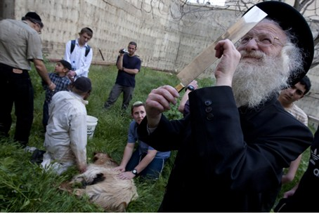 Temple-Times Passover Sacrifice Nixed by Govt. - Jewish World ...